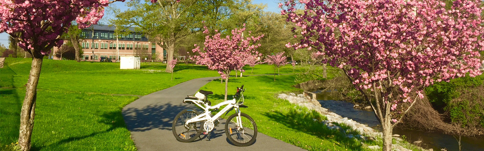 Trail with bike and blossoms near brentwood