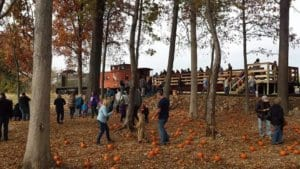 A group of people in a grove with a few tall trees pick up pumpkins scattered on the ground. The train that transported the people to this spot can be seen in the background.
