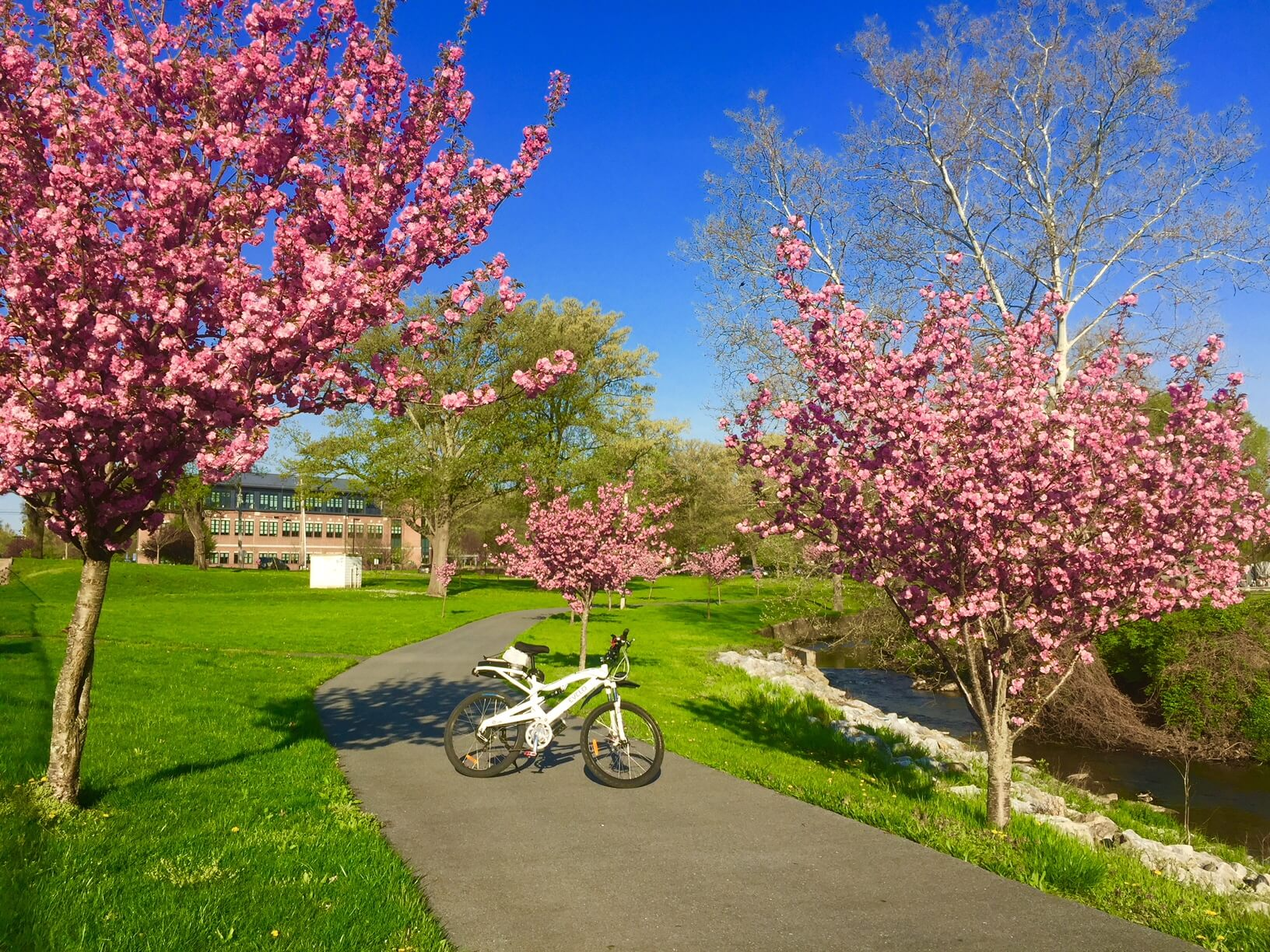 A lone bicycle stands among the Pink Cherry Blossom Trees on the Brentwood trail in Reading, PA