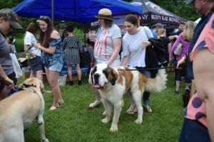 A St. Bernard and its owners walk the grounds of the Reading Public Museum as they enjoy the Barks & Brew fundraising event.