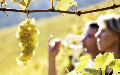 The Ultimate Guide To The Berks County Wine Trail
