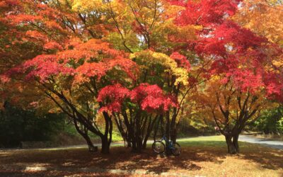 5 of the Best Places to See Fall Foliage in Berks County